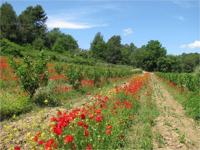 Imatge4 Terra Franca