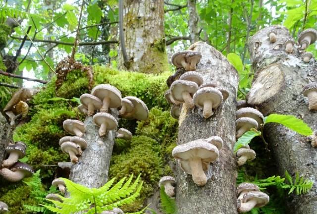 Imagen1 Fungi Natur