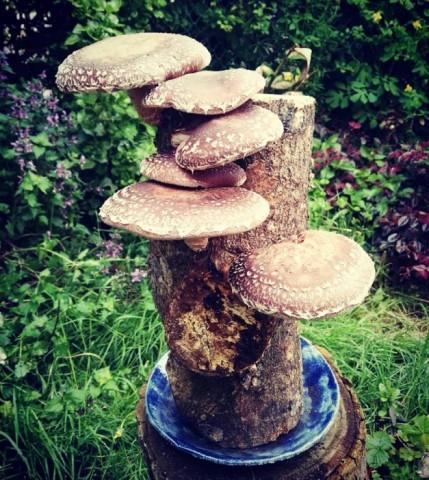 Imagen2 Fungi Natur